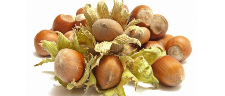 Фундук на даче — особенности выращивания