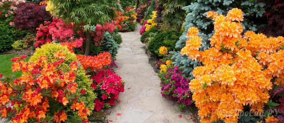 Декоративные кустарники для дачи